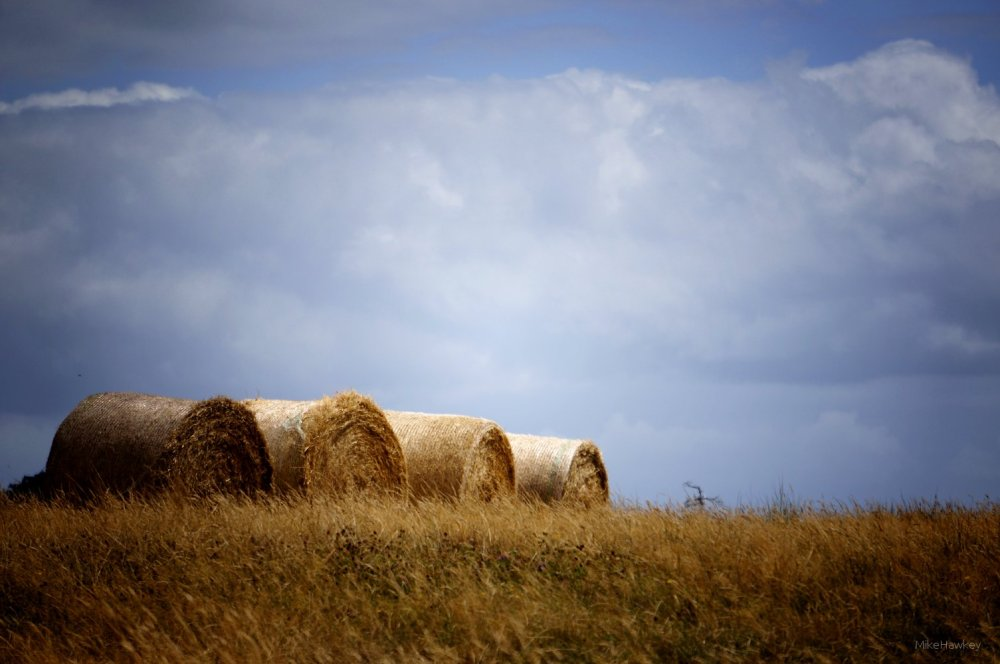 the Hay