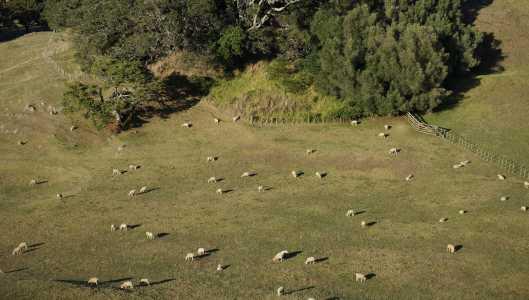 Little Sheep below