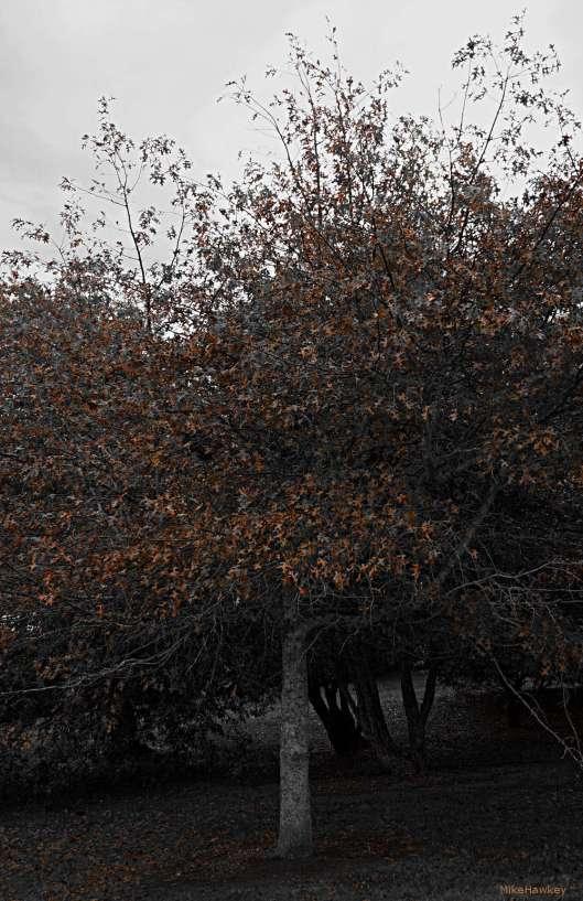 Tree Leaves