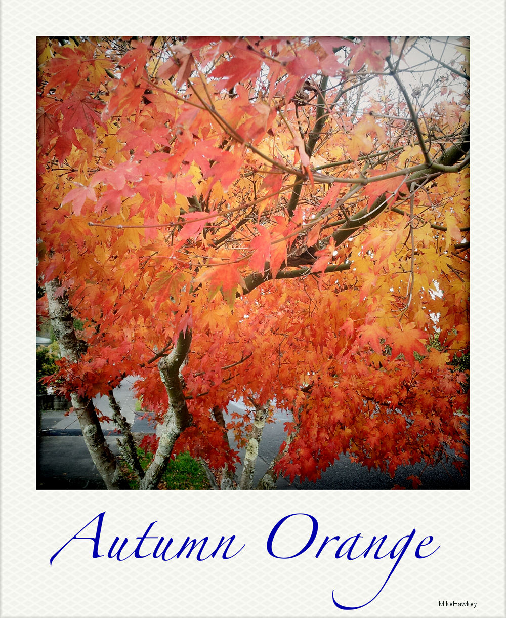Autumn Orange