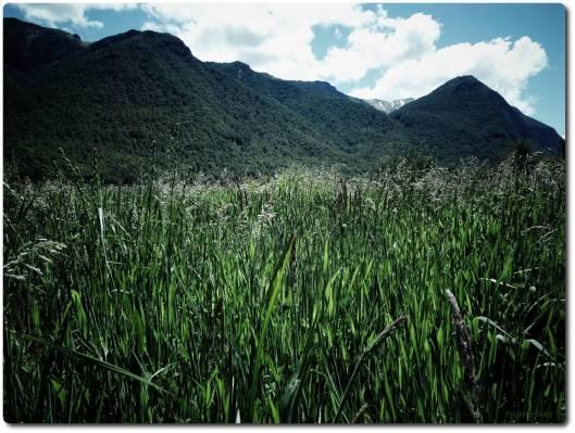 Hills beyond the Grass