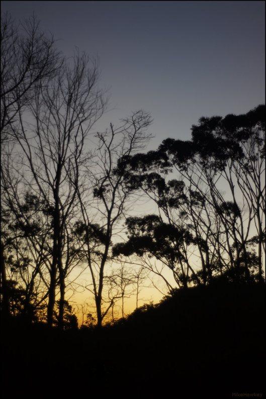 Sunset on Trees