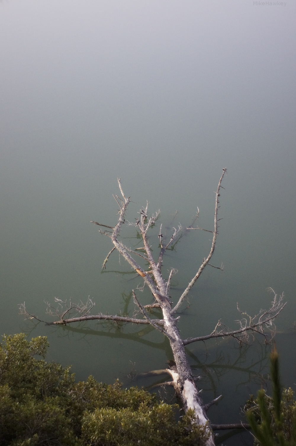 Tree in the Still Water