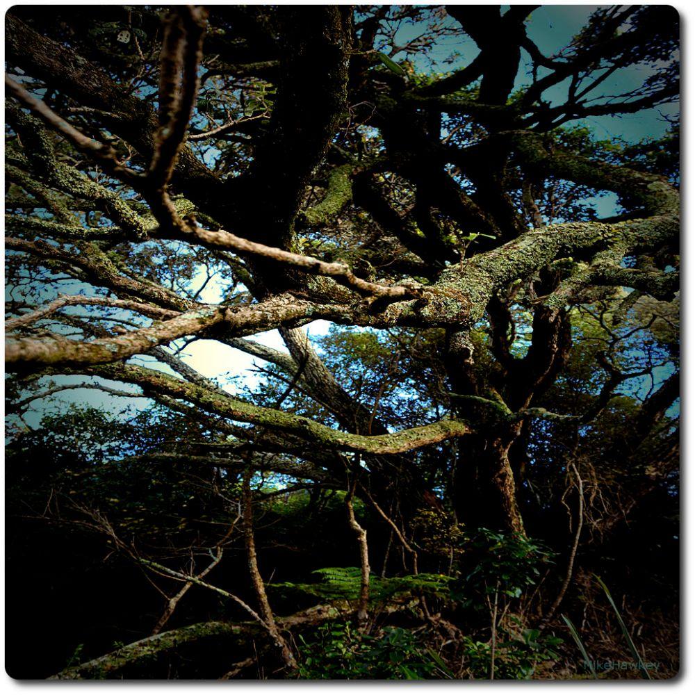 Wraparound Tree