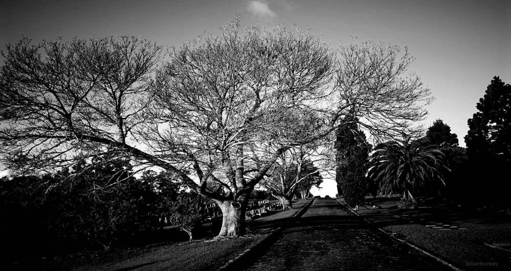 Graveyard Wander