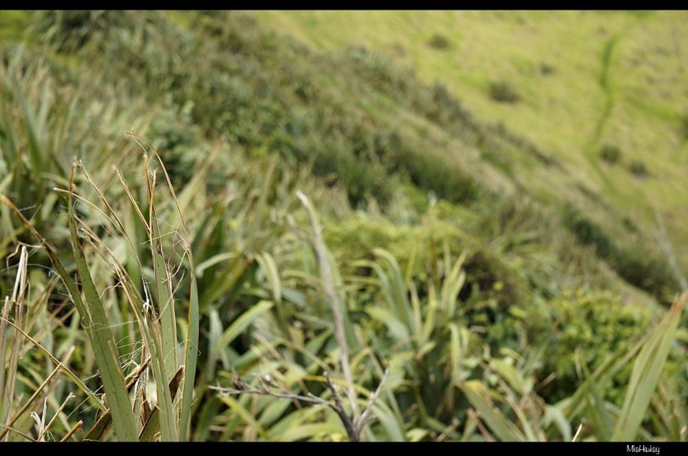 The Grass Path
