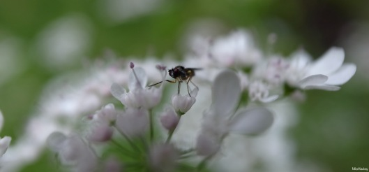 in my garden 3