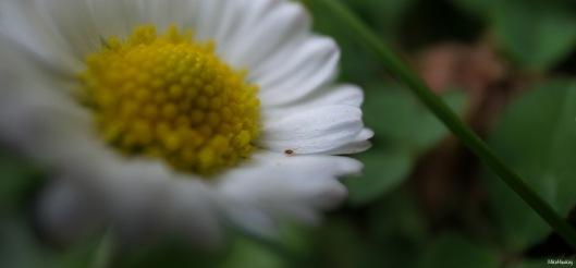 In my garden 4