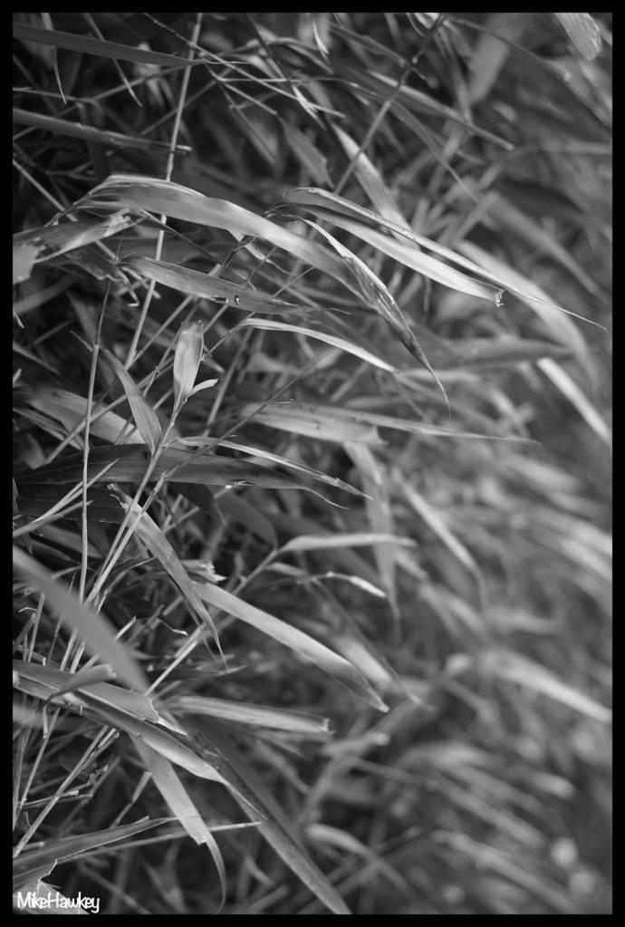 FFL Bamboo