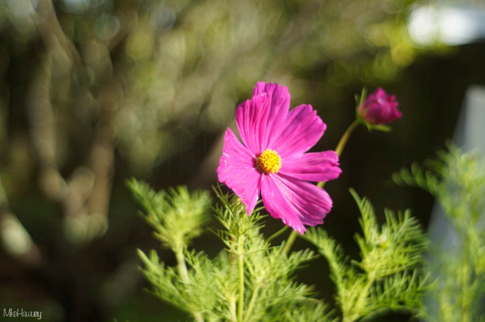 FFL Flower