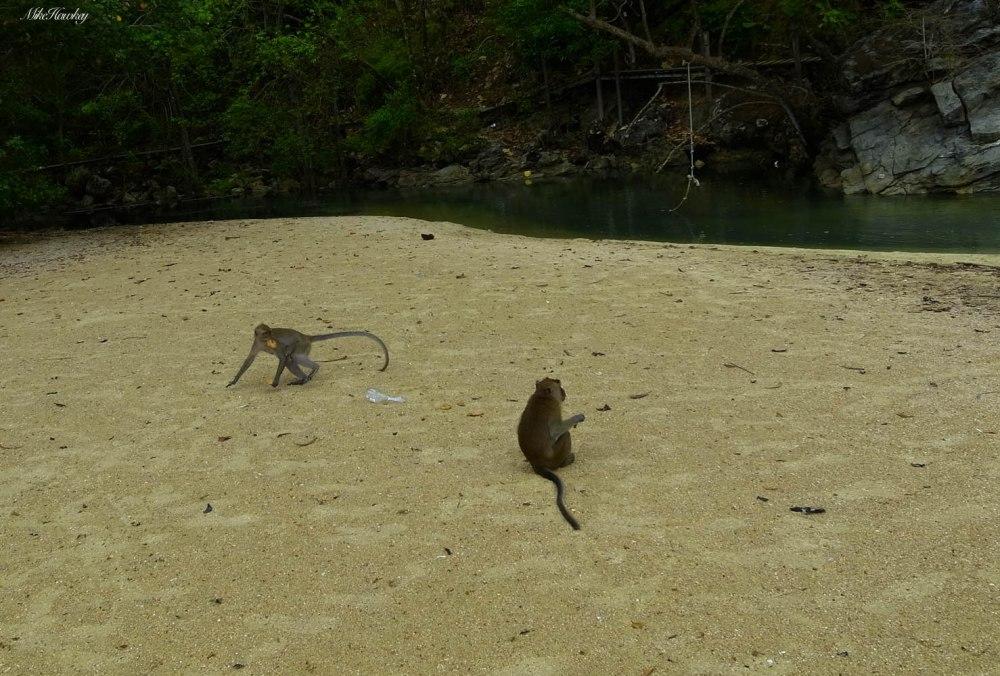 Monkeys on Sand 2