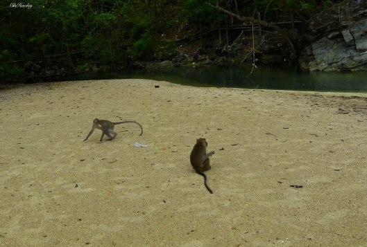 Monkeys on Sand 2