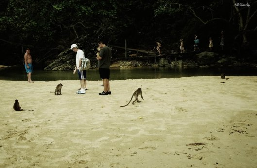 Monkeys on sand 3