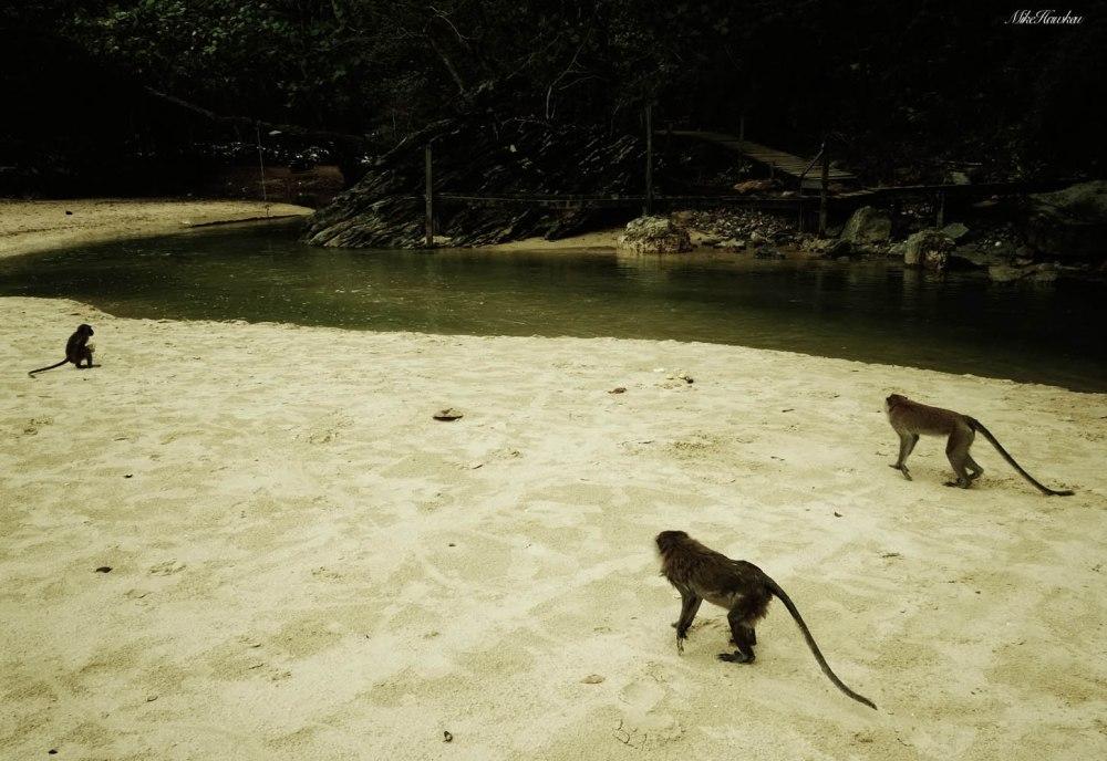 Monkeys on Sand
