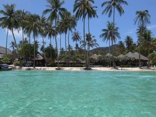 New Island 1