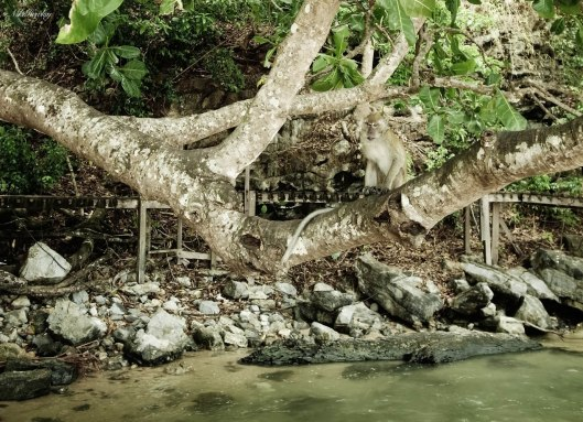 Tree Monkeys 2