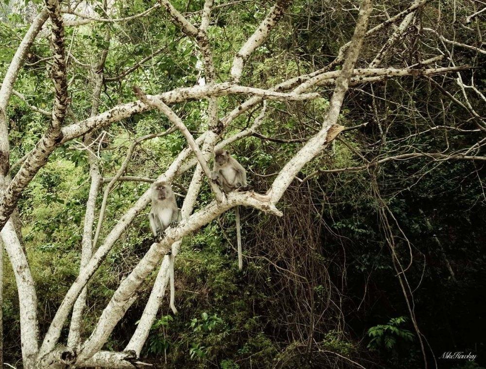 Tree Monkeys 3