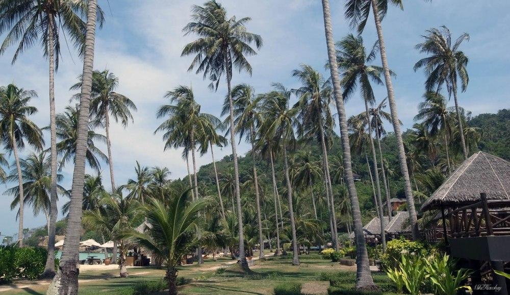 The resort 3