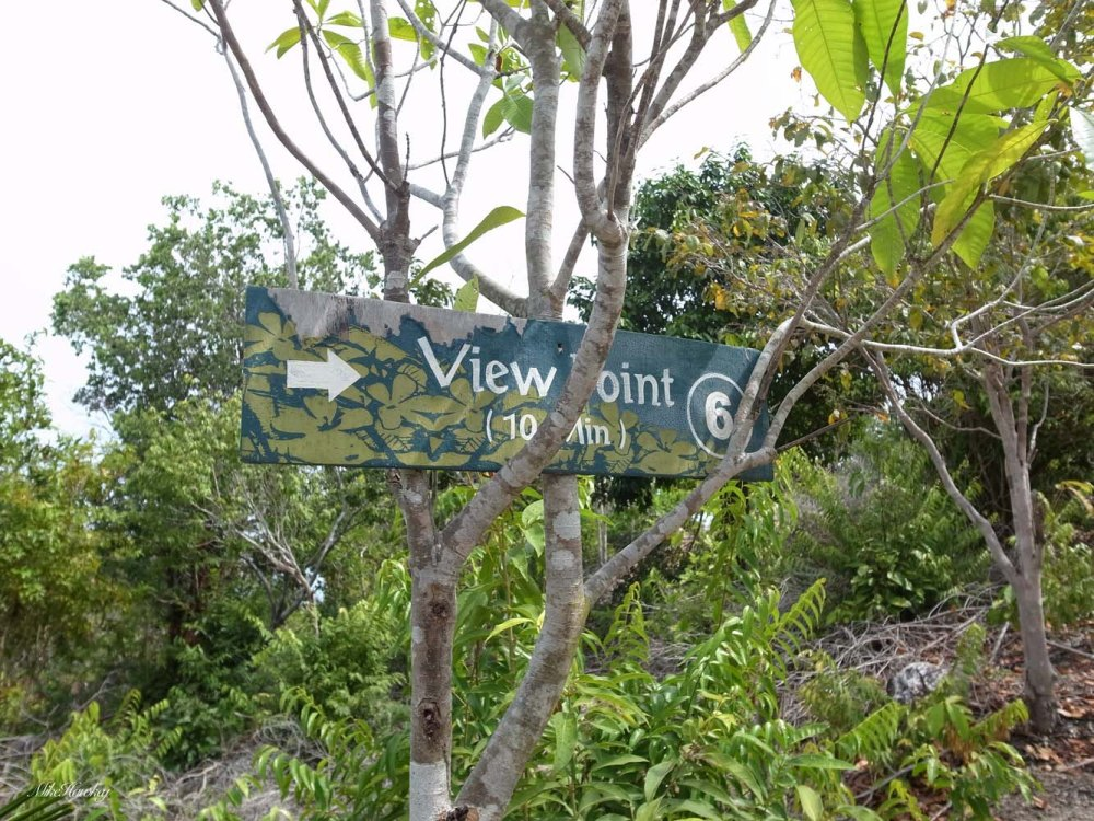 view point 5