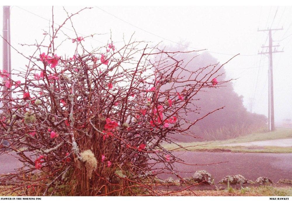 flower in the morning fog