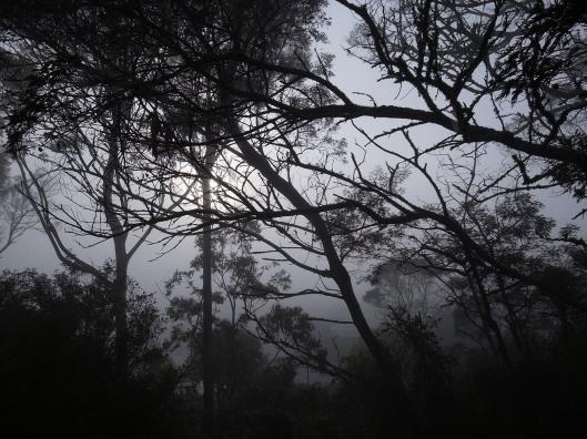 Forest fog 2